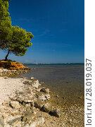 Купить «island of vir,croatia», фото № 28019037, снято 14 ноября 2018 г. (c) PantherMedia / Фотобанк Лори