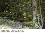 Купить «conifers and rocks on a mountain pasture in front of cloudy sky on the weinebene koralpe in styria», фото № 28021437, снято 20 марта 2019 г. (c) PantherMedia / Фотобанк Лори