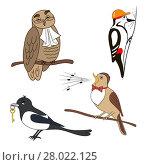 Купить «Set of cartoon birds. Owl, woodpecker, magpie, nightingale.», иллюстрация № 28022125 (c) PantherMedia / Фотобанк Лори