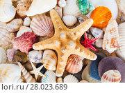 Купить «Summer background.  Sea shells with sand as background», фото № 28023689, снято 23 апреля 2019 г. (c) PantherMedia / Фотобанк Лори