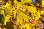 Купить «Maple Park in autumn», фото № 28040457, снято 20 февраля 2018 г. (c) PantherMedia / Фотобанк Лори