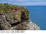 Купить «Birders at sea cliff top, home of seabird colony in breeding season in spring,  Fowlsheugh Coastal Nature Reserve, Kincardineshire, Scotland, UK, May», фото № 28048881, снято 16 октября 2018 г. (c) Nature Picture Library / Фотобанк Лори