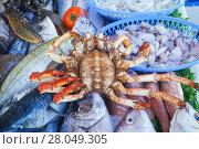 Купить «The royal crab lies on the fish», фото № 28049305, снято 16 февраля 2020 г. (c) Васильева Юлия / Фотобанк Лори
