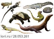 Купить «reptiles isolated on white», фото № 28053261, снято 20 октября 2019 г. (c) Яков Филимонов / Фотобанк Лори
