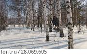 Купить «Man in winter clothes fast riding on mini snowmobile on deep snowdrifts in the forest and maneuvering between the trees», видеоролик № 28069605, снято 18 марта 2018 г. (c) Константин Шишкин / Фотобанк Лори