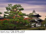 Купить «Garden with beautiful pine trees in front of Tofukuji temple bell tower and a sub-temple in autumn scenery. Tofuku-ji, Higashiyama-ku, Kyoto, Japan.», фото № 28075237, снято 20 ноября 2017 г. (c) age Fotostock / Фотобанк Лори