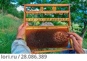 Купить «Royal jelly production work», фото № 28086389, снято 5 июля 2020 г. (c) easy Fotostock / Фотобанк Лори