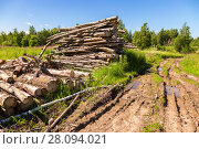 Купить «Cut tree logs piled up near a forest road in sunny summer day», фото № 28094021, снято 31 июля 2017 г. (c) FotograFF / Фотобанк Лори