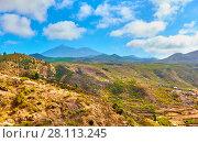 Купить «Tenerife - Canary Islands», фото № 28113245, снято 7 декабря 2017 г. (c) Роман Сигаев / Фотобанк Лори