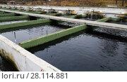 Купить «Opened reservoirs of fish farm», фото № 28114881, снято 4 февраля 2018 г. (c) Яков Филимонов / Фотобанк Лори