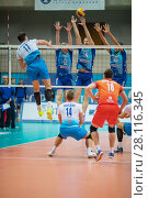 Купить «MOSCOW - NOV 5, 2016: Athletes jump at volleyball game Dynamo (Moscow) and Ural (Ufa) in Palace of Sports Dynamo», фото № 28116345, снято 5 ноября 2016 г. (c) Losevsky Pavel / Фотобанк Лори