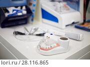 Купить «Model of human jaw with teeth, electrical toothbrush and glasses on table, shallow dof», фото № 28116865, снято 19 октября 2016 г. (c) Losevsky Pavel / Фотобанк Лори