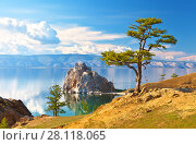 Купить «Baikal Lake. Olkhon Island. Beautiful old larch and Shamanka Rock on June afternoon», фото № 28118065, снято 19 июня 2014 г. (c) Виктория Катьянова / Фотобанк Лори
