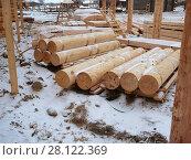 Купить «Точеные бревна для строительства. Сосна», эксклюзивное фото № 28122369, снято 26 февраля 2017 г. (c) Анатолий Матвейчук / Фотобанк Лори