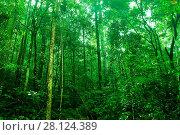 Купить «Tropical dense forest», фото № 28124389, снято 27 марта 2019 г. (c) easy Fotostock / Фотобанк Лори