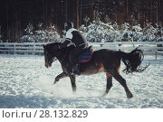 Купить «Winter teenage girl jump horse ride jumping», фото № 28132829, снято 26 января 2014 г. (c) Julia Shepeleva / Фотобанк Лори