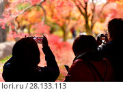 Купить «Tourists taking pictures of bright red autumn Japanese gardens at Tofukuji temple in Kyoto, Japan.», фото № 28133113, снято 20 ноября 2017 г. (c) age Fotostock / Фотобанк Лори