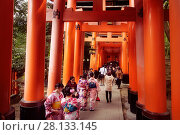 Купить «Tourists and women in kimono walking along a long Torii path, Senbon torii, a row of orange gates, at Fushimi Inari Taisha head shrine in Fushimi Ward, Kyoto, Japan.», фото № 28133145, снято 20 ноября 2017 г. (c) age Fotostock / Фотобанк Лори