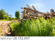 Купить «Cut tree logs piled up near a forest road in sunny summer day», фото № 28152697, снято 31 июля 2017 г. (c) FotograFF / Фотобанк Лори