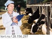 Купить «concentrated adult woman is standing at the cow farm», фото № 28156297, снято 24 октября 2017 г. (c) Яков Филимонов / Фотобанк Лори