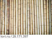 Купить «Fence of brown bamboo trunks», фото № 28171397, снято 9 декабря 2015 г. (c) Losevsky Pavel / Фотобанк Лори