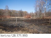 Купить «Burned field with a naked trees and withered grass», фото № 28171993, снято 11 апреля 2015 г. (c) Losevsky Pavel / Фотобанк Лори