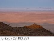 Купить «Quiver Tree (Aloe dichotoma)  Namib-Naukluft National Park, Namibia.», фото № 28183889, снято 24 марта 2018 г. (c) Nature Picture Library / Фотобанк Лори