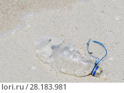 Купить «Plastic bottle discarded in the sea and washed ashore, Triton Bay, Mainland New Guinea, Western Papua, Indonesian New Guinea», фото № 28183981, снято 3 апреля 2020 г. (c) Nature Picture Library / Фотобанк Лори