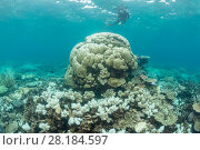 Купить «Coral bleaching in the northern Great Barrier Reef, Queensland, Australia March 2017.», фото № 28184597, снято 21 марта 2018 г. (c) Nature Picture Library / Фотобанк Лори