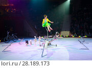Гастроли Московского цирка на льду. Дрессированные собачки под руководством Виктории Александровой (2015 год). Редакционное фото, фотограф Ольга Коцюба / Фотобанк Лори