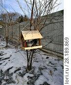 Купить «Голуби в кормушке для птиц», фото № 28189869, снято 17 марта 2018 г. (c) Виктор Нечаев / Фотобанк Лори