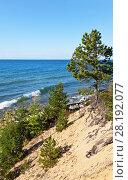 Купить «Lake Baikal. East Coast in summer day. Roots of pine tree cling of the sandy soil», фото № 28192077, снято 27 августа 2016 г. (c) Виктория Катьянова / Фотобанк Лори