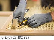 Купить «assembler with staple gun making furniture», фото № 28192985, снято 10 ноября 2017 г. (c) Syda Productions / Фотобанк Лори