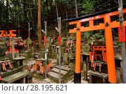 Купить «Thousands of small private worship Shinto shrines, Tsuka, at Fushimi Inari-Taisha head shrine in Fushimi Ward, Kyoto, Japan.», фото № 28195621, снято 20 ноября 2017 г. (c) age Fotostock / Фотобанк Лори