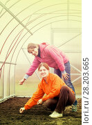 Купить «women sows in bed at hothouse», фото № 28203665, снято 1 мая 2010 г. (c) Яков Филимонов / Фотобанк Лори