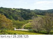 Купить «Tea fields on the island of Sao Miguel, Azores, Portugal», фото № 28208125, снято 6 мая 2012 г. (c) Юлия Бабкина / Фотобанк Лори