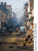 Купить «Urban street in Dehli with pollution, cattle and dogs. Delhi, India», фото № 28225093, снято 19 августа 2018 г. (c) Nature Picture Library / Фотобанк Лори