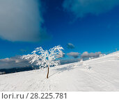 Winter snow cowered tree in mountain. Стоковое фото, фотограф Юрий Брыкайло / Фотобанк Лори