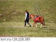 Купить «Девушка с пони», эксклюзивное фото № 28228385, снято 9 апреля 2017 г. (c) Юрий Морозов / Фотобанк Лори