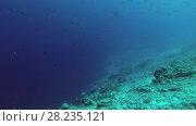 Купить «Tiger Shark emerges from the depths of the reef», видеоролик № 28235121, снято 27 марта 2018 г. (c) Некрасов Андрей / Фотобанк Лори