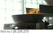 Купить «Macaroni dropping from a conveyor belt to prepare pasta», видеоролик № 28235273, снято 18 августа 2019 г. (c) Константин Шишкин / Фотобанк Лори