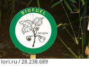 Купить «Bio fuel display at the Eden Project in Cornwall, England, UK, April 2007.», фото № 28238689, снято 22 сентября 2018 г. (c) Nature Picture Library / Фотобанк Лори