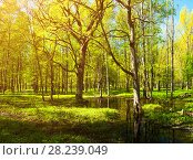 Купить «Spring forest landscape - bright green spring forest trees and flooded forest glade», фото № 28239049, снято 15 мая 2011 г. (c) Зезелина Марина / Фотобанк Лори