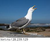 Купить «Big seagull close up», фото № 28239129, снято 21 февраля 2018 г. (c) Михаил Коханчиков / Фотобанк Лори
