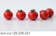 Купить «Tomatoes roll on white background in slow motion», видеоролик № 28239321, снято 29 марта 2018 г. (c) Володина Ольга / Фотобанк Лори