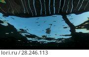 Купить «Arabian Reef-egret or Western Reef Heron (Egretta gularis schistacea) stands on the pier and hunts on school of Hardyhead Silverside (Atherinomorus lacunosus) - underwater split level, Red sea, Marsa Alam, Abu Dabab, Egypt», видеоролик № 28246113, снято 25 октября 2017 г. (c) Некрасов Андрей / Фотобанк Лори