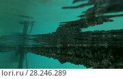 Купить «Arabian Reef-egret or Western Reef Heron (Egretta gularis schistacea) sits on a pier - underwater split level, Red sea, Marsa Alam, Abu Dabab, Egypt», видеоролик № 28246289, снято 25 октября 2017 г. (c) Некрасов Андрей / Фотобанк Лори