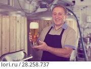 Купить «Adult brewer is standing with golden beer in glass», фото № 28258737, снято 18 сентября 2017 г. (c) Яков Филимонов / Фотобанк Лори