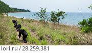Купить «Eastern chimpanzees (Pan troglodytes schweinfurtheii) walking close to the shore of Lake Tanganyika. Gombe National Park, Tanzania.», фото № 28259381, снято 28 января 2020 г. (c) Nature Picture Library / Фотобанк Лори