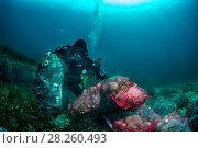Купить «Scuba diver removing plastic marine litter from the sea bed.  Mljet National Park, Mljet  Island, Croatia. May 2015.», фото № 28260493, снято 27 апреля 2018 г. (c) Nature Picture Library / Фотобанк Лори
